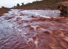 До Украины доплыли токсичные отходы из Венгрии