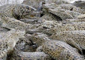 Крокодилы сбежали в тайланде